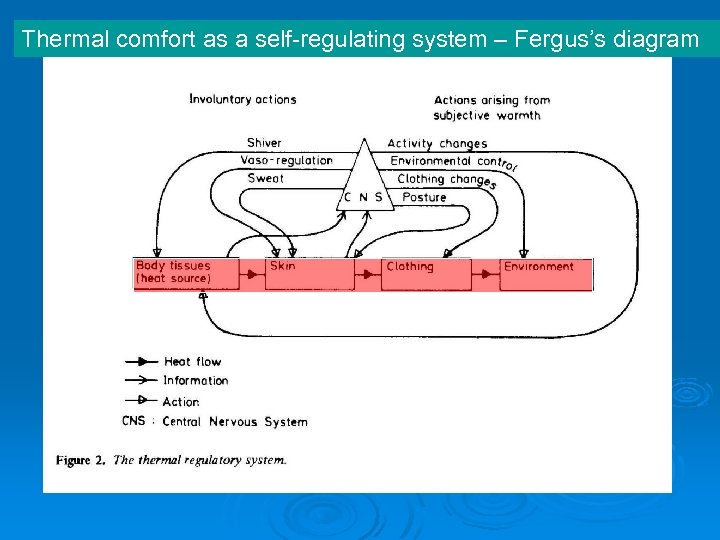 Thermal comfort as a self-regulating system – Fergus's diagram
