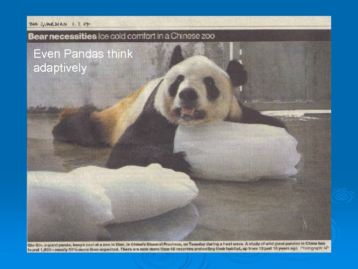 Even Pandas think adaptively