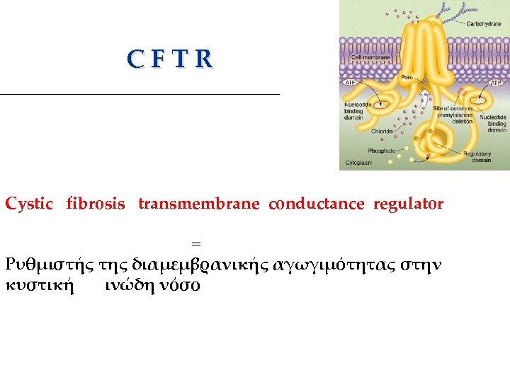 C F T R Cystic fibrosis transmembrane conductance regulator = Ρυθμιστής της διαμεμβρανικής