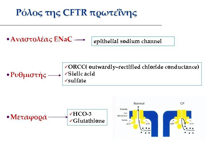 Ρόλος της CFTR πρωτεΐνης • Αναστολέας ENa. C • Ρυθμιστής • Μεταφορά epithelial sodium