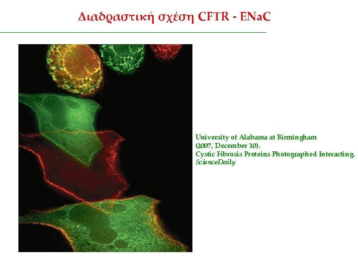 Διαδραστική σχέση CFTR - ENa. C University of Alabama at Birmingham (2007, December 10).