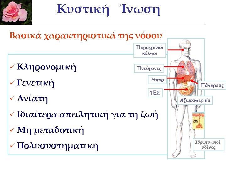 Κυστική Ίνωση Βασικά χαρακτηριστικά της νόσου Παραρρίνιοι κόλποι ü Κληρονομική ü Γενετική ü Ανίατη