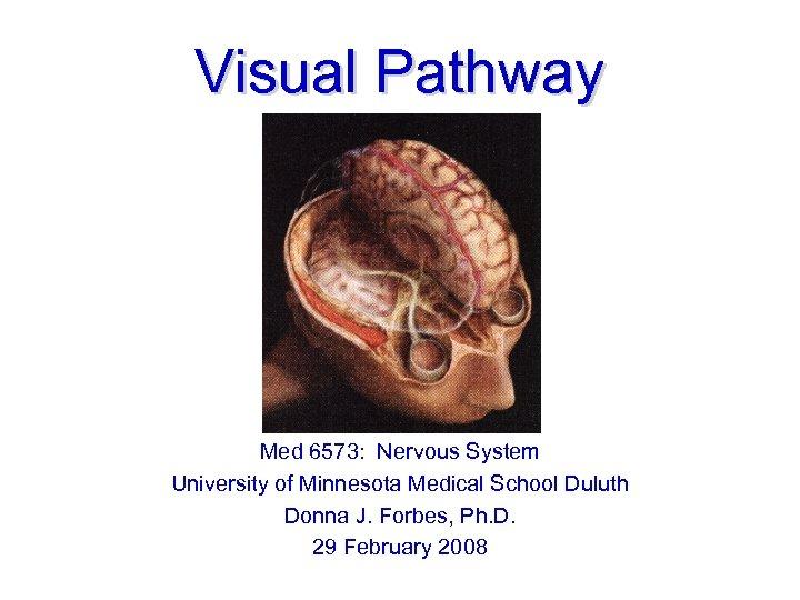 Visual Pathway Med 6573: Nervous System University of Minnesota Medical School Duluth Donna J.