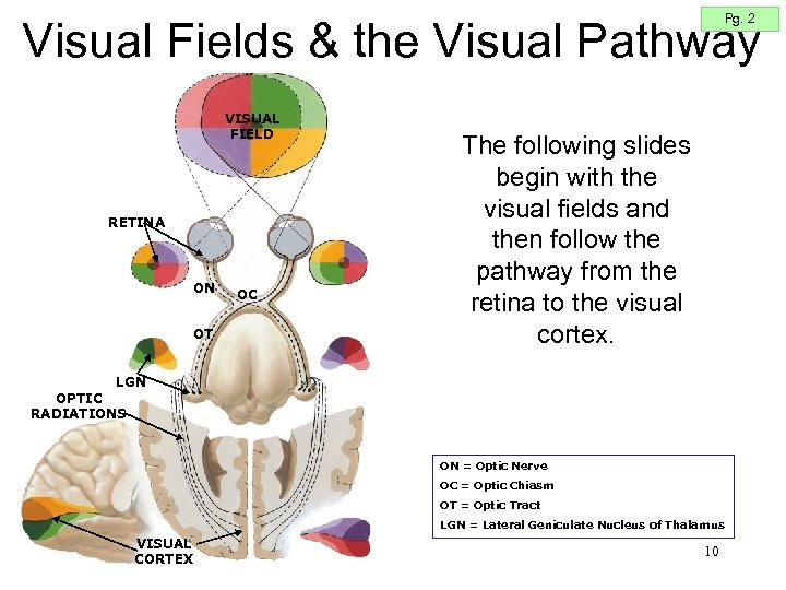 Pg. 2 Visual Fields & the Visual Pathway VISUAL FIELD RETINA ON OT OC