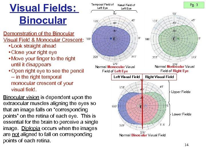 Visual Fields: Binocular Demonstration of the Binocular Visual Field & Monocular Crescent: • Look