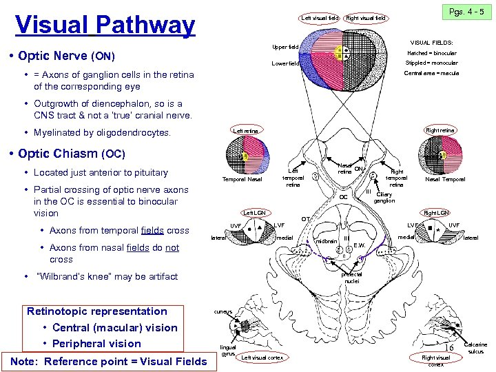Visual Pathway Left visual field Pgs. 4 - 5 Right visual field VISUAL FIELDS: