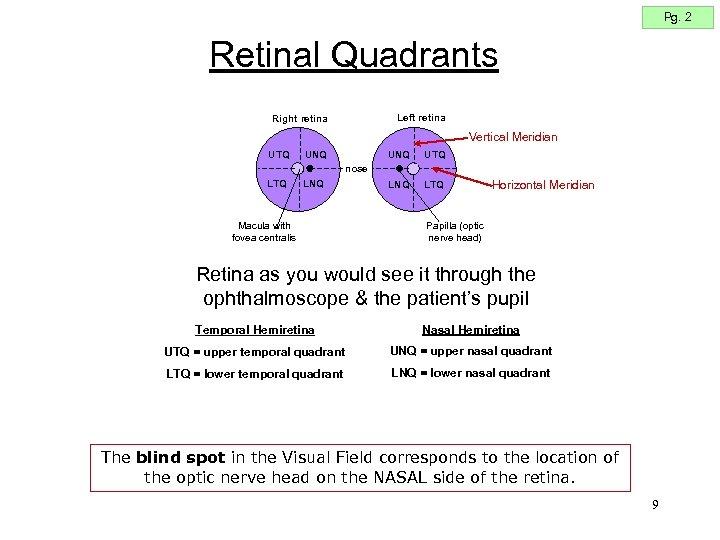 Pg. 2 Retinal Quadrants Left retina Right retina Vertical Meridian UTQ UNQ LNQ UTQ