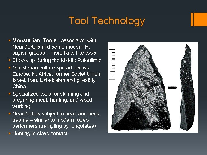 Tool Technology § Mousterian Tools– associated with Neandertals and some modern H. sapien groups
