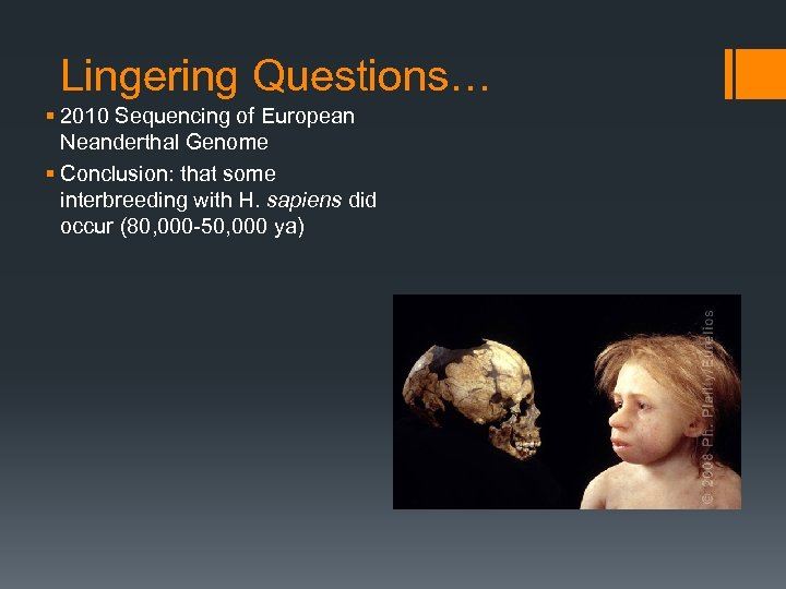 Lingering Questions… § 2010 Sequencing of European Neanderthal Genome § Conclusion: that some interbreeding