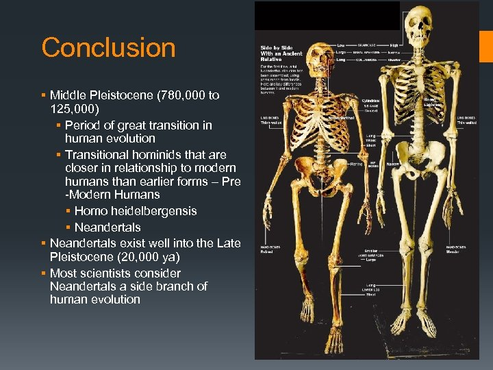 Conclusion § Middle Pleistocene (780, 000 to 125, 000) § Period of great transition