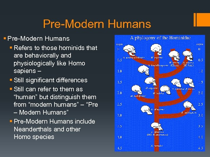 Pre-Modern Humans § Refers to those hominids that are behaviorally and physiologically like Homo