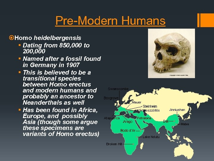 Pre-Modern Humans Homo heidelbergensis § Dating from 850, 000 to 200, 000 § Named