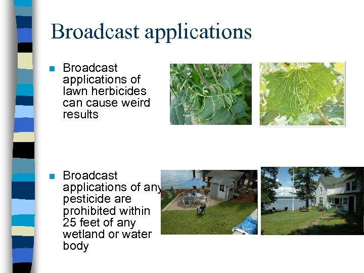 Broadcast applications n Broadcast applications of lawn herbicides can cause weird results n Broadcast