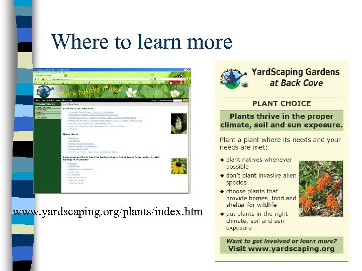 Where to learn more www. yardscaping. org/plants/index. htm