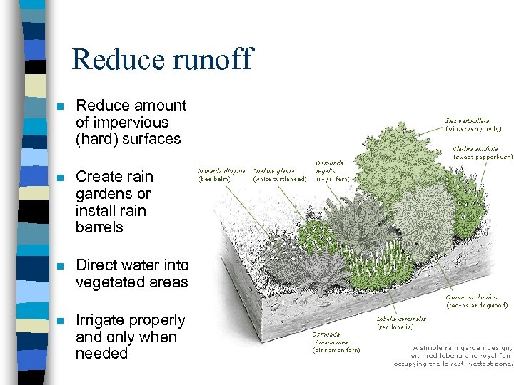Reduce runoff n Reduce amount of impervious (hard) surfaces n Create rain gardens or