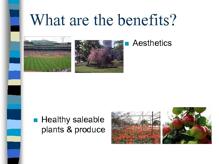 What are the benefits? n n Healthy saleable plants & produce Aesthetics