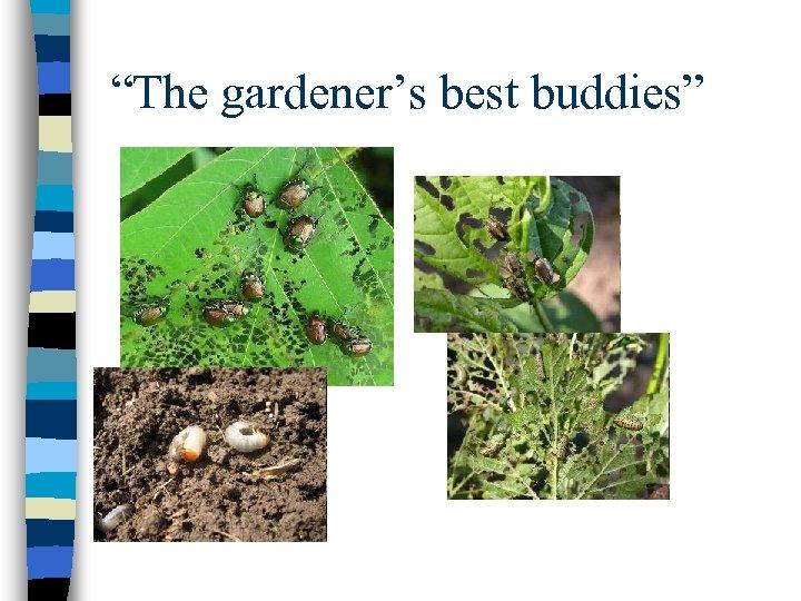 """""""The gardener's best buddies"""""""