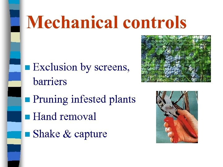 Mechanical controls n Exclusion by screens, barriers n Pruning infested plants n Hand removal