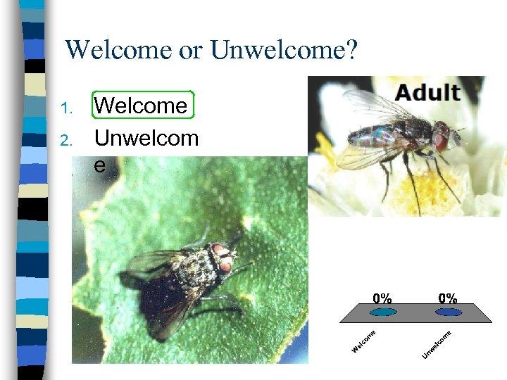 Welcome or Unwelcome? 1. 2. Welcome Unwelcom e