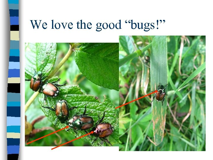 "We love the good ""bugs!"" Photo Courtesy Vincent Hickey"