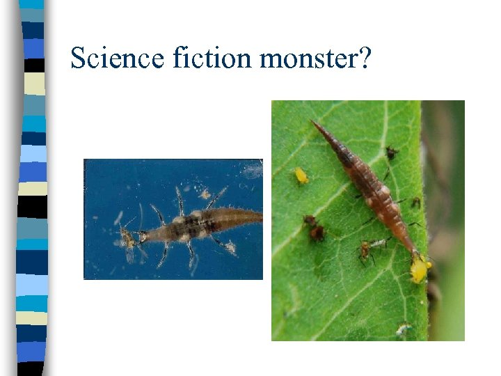 Science fiction monster?
