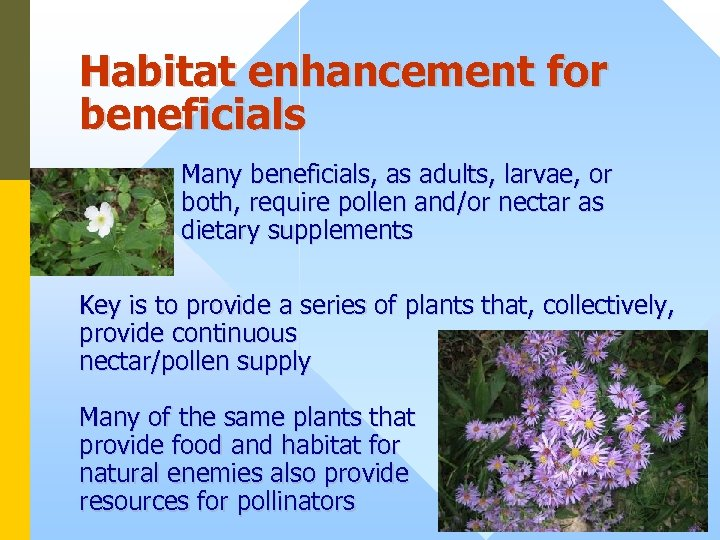 Habitat enhancement for beneficials Many beneficials, as adults, larvae, or both, require pollen and/or