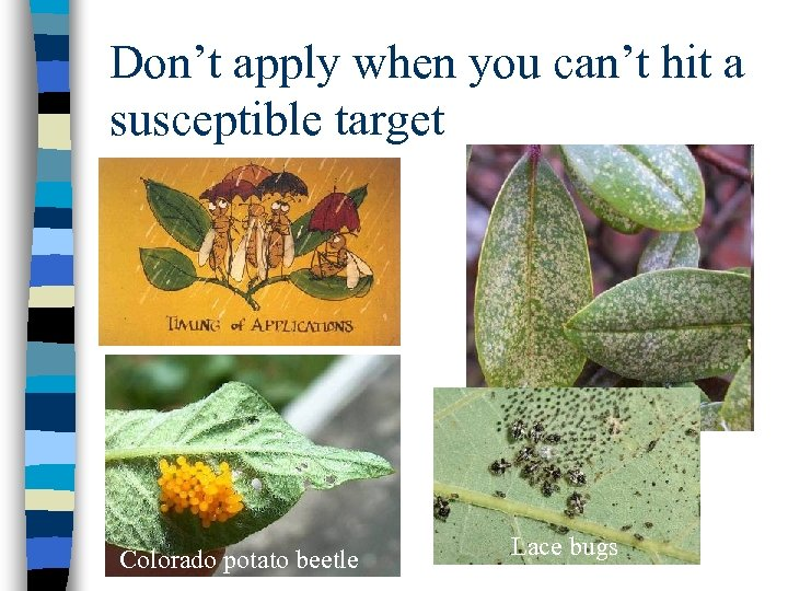Don't apply when you can't hit a susceptible target Colorado potato beetle Lace bugs