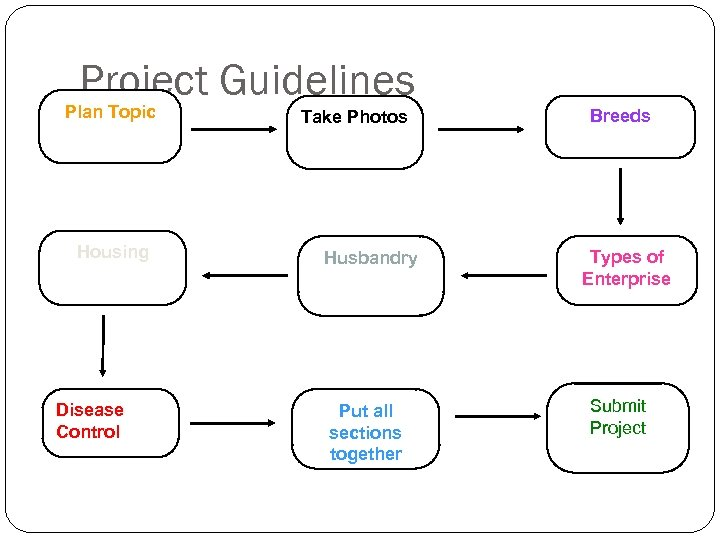Project Guidelines Plan Topic Housing Disease Control Take Photos Husbandry Put all sections together