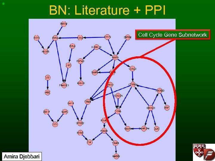 BN: Literature + PPI Cell Cycle Gene Subnetwork Amira Djebbari