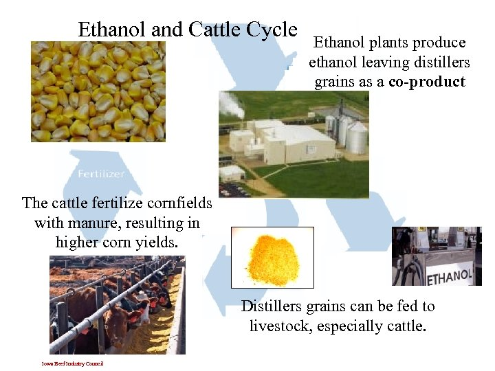 Ethanol and Cattle Cycle Ethanol plants produce ethanol leaving distillers grains as a co-product