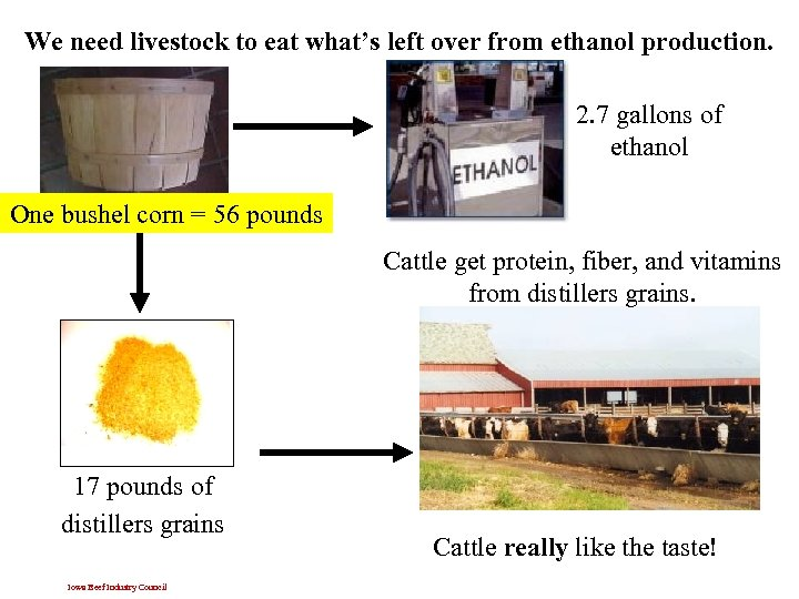We need livestock to eat what's left over from ethanol production. 2. 7 gallons