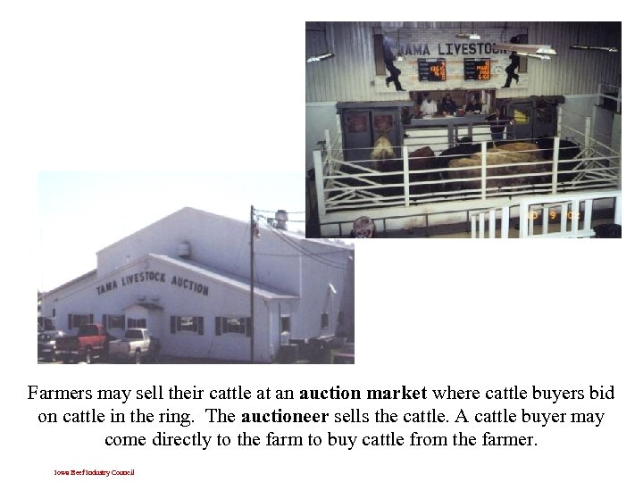 Farmers may sell their cattle at an auction market where cattle buyers bid on