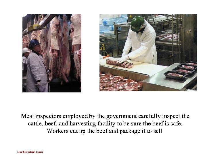 Meat inspectors employed by the government carefully inspect the cattle, beef, and harvesting facility