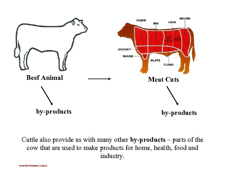 Beef Animal by-products Meat Cuts by-products Cattle also provide us with many other by-products