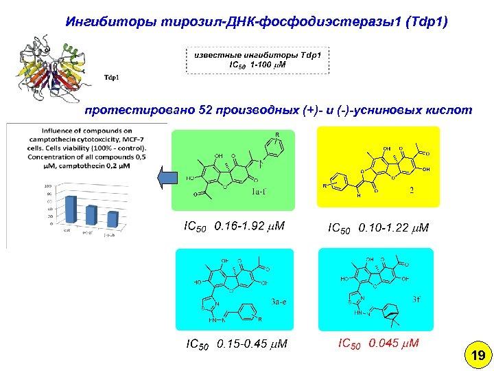 Ингибиторы тирозил-ДНК-фосфодиэстеразы1 (Tdp 1) протестировано 52 производных (+)- и (-)-усниновых кислот 19