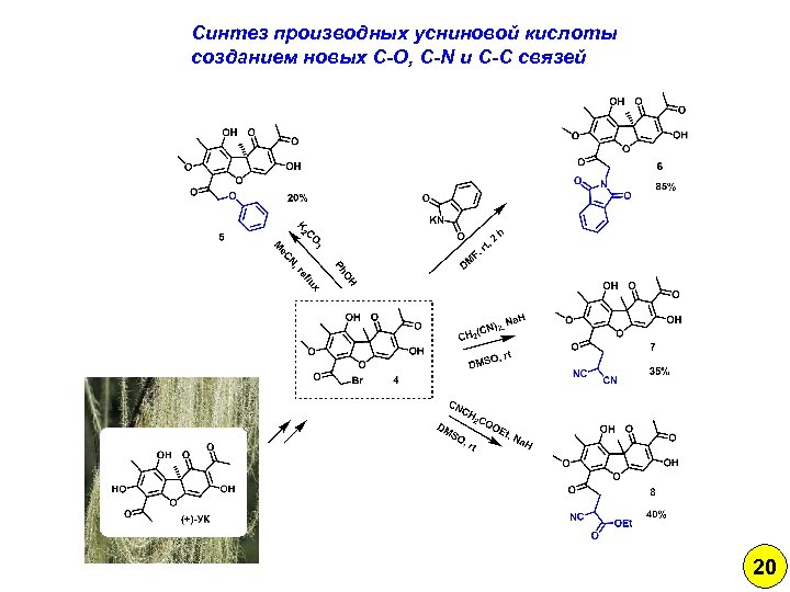 Синтез производных усниновой кислоты созданием новых C-O, C-N и C-C связей 20