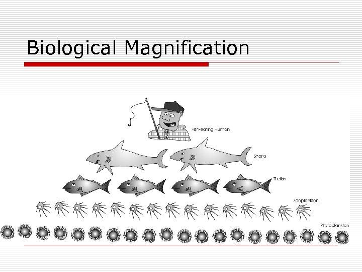 Biological Magnification