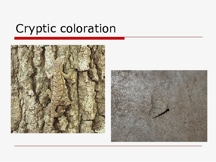 Cryptic coloration