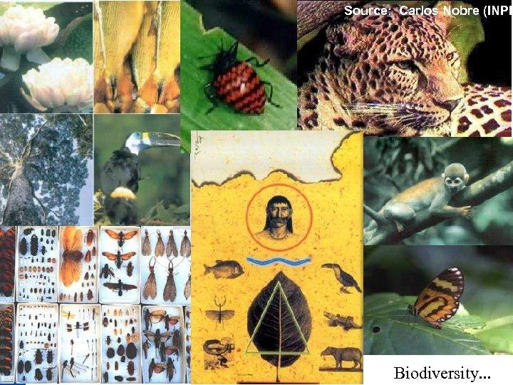 Source: Carlos Nobre (INPE Biodiversity. . .