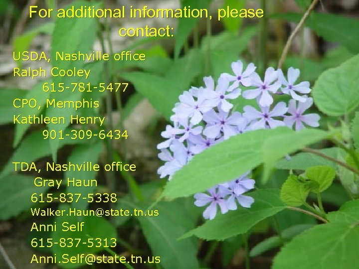 For additional information, please contact: USDA, Nashville office Ralph Cooley 615 -781 -5477 CPO,
