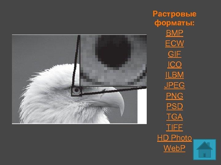 Растровые форматы: BMP ECW GIF ICO ILBM JPEG PNG PSD TGA TIFF HD Photo