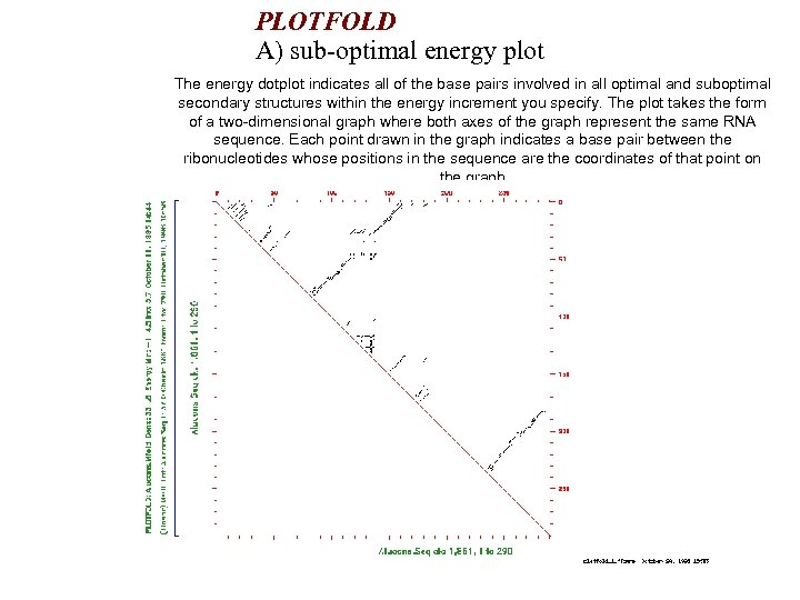 PLOTFOLD A) sub-optimal energy plot The energy dotplot indicates all of the base pairs
