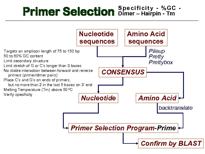 Primer Selection Nucleotide sequences Targets an amplicon length of 75 to 150 bp 50