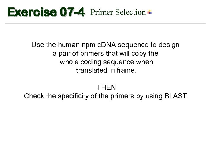 Exercise 07 -4 Primer Selection Use the human npm c. DNA sequence to design