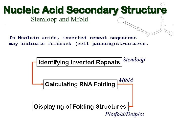 Nucleic Acid Secondary Structure Stemloop and Mfold In Nucleic acids, inverted repeat sequences may