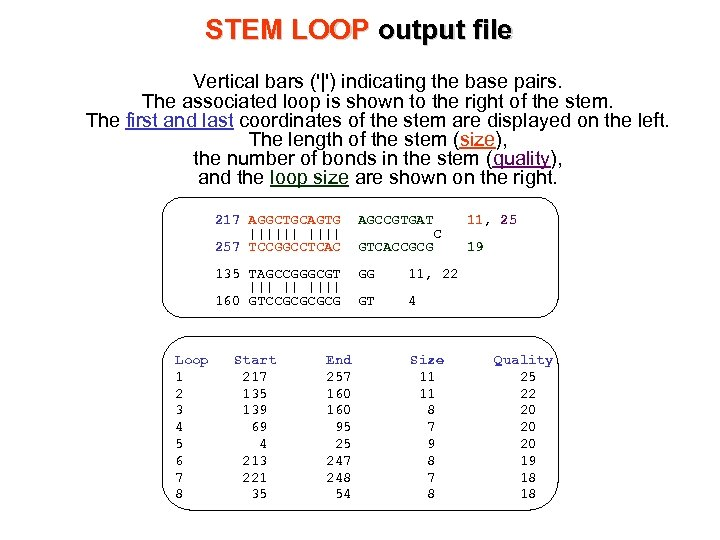 STEM LOOP output file Vertical bars ('|') indicating the base pairs. The associated loop
