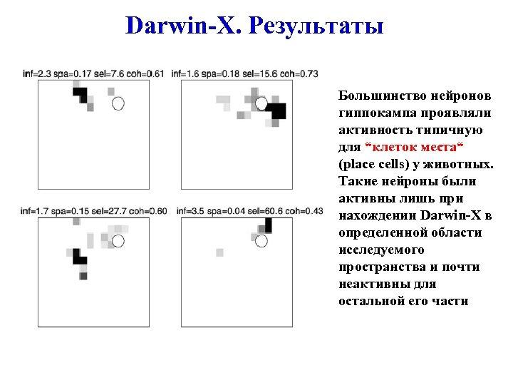 """Darwin-X. Результаты Большинство нейронов гиппокампа проявляли активность типичную для """"клеток места"""" (place cells) у"""