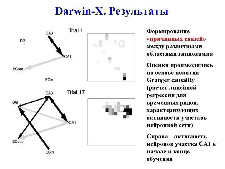 Darwin-X. Результаты Формирование «причинных связей» между различными областями гиппокампа Оценки производились на основе понятия