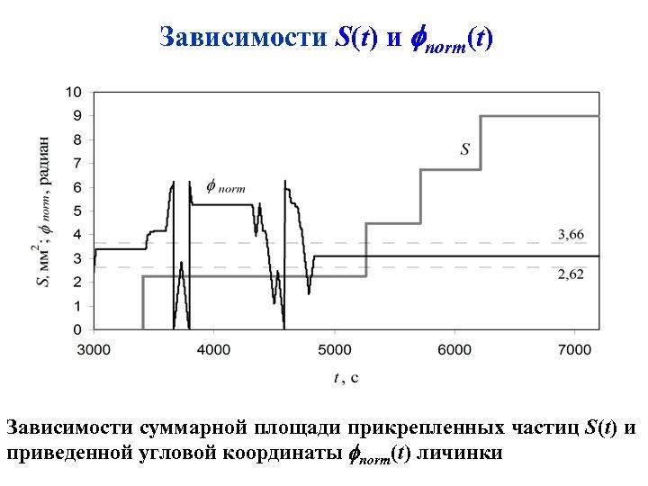Зависимости S(t) и norm(t) Зависимости суммарной площади прикрепленных частиц S(t) и приведенной угловой координаты
