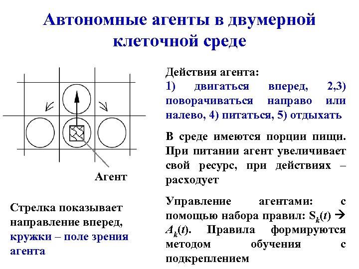 Автономные агенты в двумерной клеточной среде Действия агента: 1) двигаться вперед, 2, 3) поворачиваться